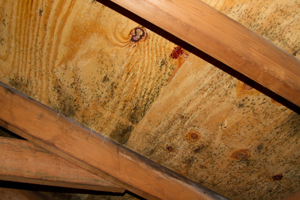 Mold growing on roof sheathing in Piscataway attic